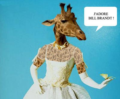 000024-girafe
